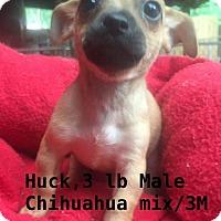 Adopt A Pet :: Huck - North Brunswick, NJ