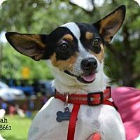 Adopt A Pet :: Noah - Conroe, TX