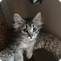 Adopt A Pet :: Wallace - Mount Laurel, NJ