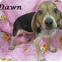 Adopt A Pet :: Dawn - Bartonsville, PA