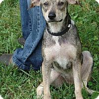 Adopt A Pet :: Buttercup - Foster, RI