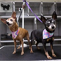 Adopt A Pet :: MUFFIN AND MACY - Brea, CA