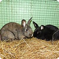 Adopt A Pet :: Sally - Elizabethtown, KY