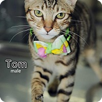 Adopt A Pet :: Tom Jang - Seattle, WA