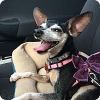 Adopt A Pet :: Gertrude - Tucson, AZ