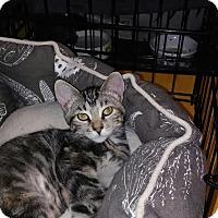 Adopt A Pet :: Buttercup - Alamo, CA