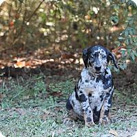 Adopt A Pet :: Finnegan - Groton, MA
