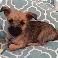 Adopt A Pet :: Bikini - Conroe, TX