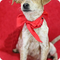 Terrier (Unknown Type, Small)/Australian Cattle Dog Mix Puppy for adoption in Dalton, Georgia - Zar