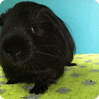 Adopt A Pet :: Jagger (Neutered) - Coral Springs, FL