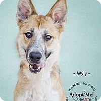 Adopt A Pet :: Wyly - Phoenix, AZ