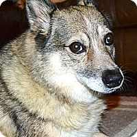 Adopt A Pet :: Willow - Homewood, AL