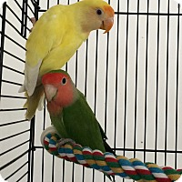 Adopt A Pet :: Sunny & Houdini - Punta Gorda, FL