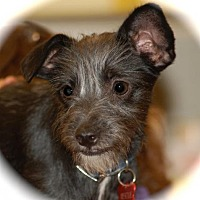 Adopt A Pet :: Monkey - Phoenix, AZ