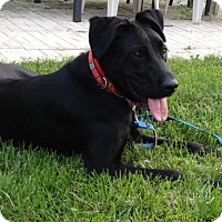 Adopt A Pet :: Zoey - Brant, ON