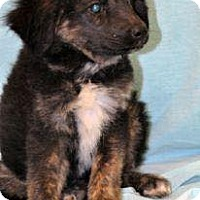 Adopt A Pet :: Gretal - Adoption Pending - Manchester, CT