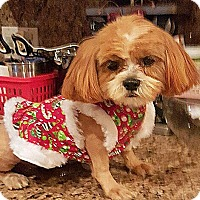 Adopt A Pet :: BONNIE AND CLYDE - Winnetka, CA