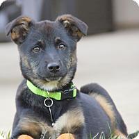 Adopt A Pet :: Diane von Dame - Thousand Oaks, CA