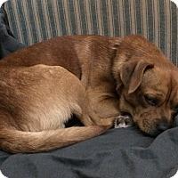 Adopt A Pet :: Yorn - Alexandria, VA