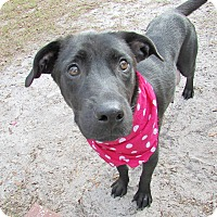 Adopt A Pet :: Holly - Umatilla, FL