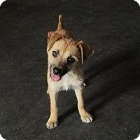 Adopt A Pet :: Prairie - Cedar Creek, TX