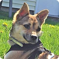 Adopt A Pet :: TJ - Schaumburg, IL