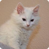 Adopt A Pet :: Maverick - Davis, CA