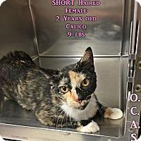 Adopt A Pet :: Petco2 - Triadelphia, WV