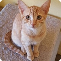 Adopt A Pet :: Lorenzo - Encinitas, CA
