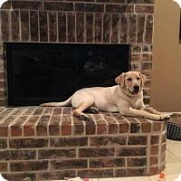 Adopt A Pet :: Millie - Denton, TX