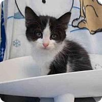 Adopt A Pet :: *KYLE - Upper Marlboro, MD