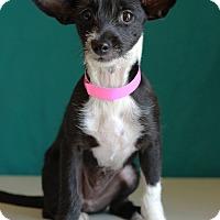 Adopt A Pet :: Matilda-ADOPTION PENDING - Waldorf, MD