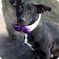 Adopt A Pet :: Leonard - Dalton, GA