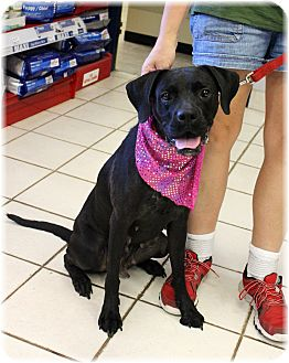 Labrador Retriever Mix Dog for adoption in Welland, Ontario - Lydia