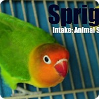 Adopt A Pet :: Spriggy - Hamilton, ON