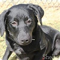 Adopt A Pet :: Quigley - Goodlettsville, TN