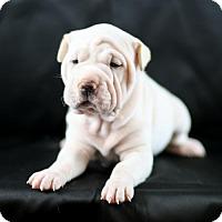 Adopt A Pet :: Elizabeth Taylor - West Orange, NJ