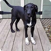 Adopt A Pet :: Della - Thompson, PA