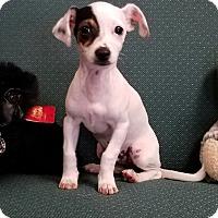 Adopt A Pet :: MO - Gustine, CA