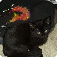 Adopt A Pet :: Louise - Toledo, OH