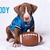 Adopt A Pet :: Teddy - Garden City, MI