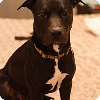 Adopt A Pet :: Galileo - Rancho Cucamonga, CA