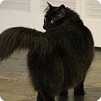 Adopt A Pet :: London - Houston, TX