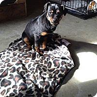 Adopt A Pet :: McKinley - Hazard, KY