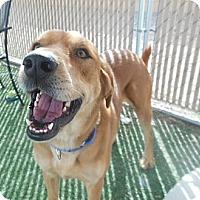 Adopt A Pet :: Thaddeus - Phoenix, AZ