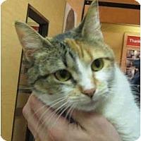 Adopt A Pet :: Mitzi - Jenkintown, PA