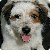 Adopt A Pet :: Arnold - Norwalk, CT