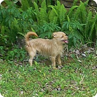 Adopt A Pet :: Shaggy - Ormond Beach, FL