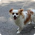 Adopt A Pet :: Buddy Boy