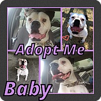 Adopt A Pet :: Baby - Cheney, KS